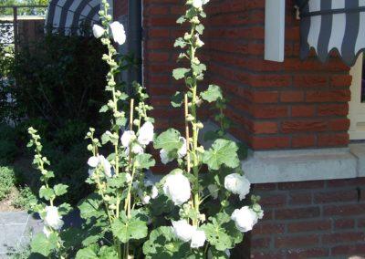 de-vries-groenwerk-beplanting-29
