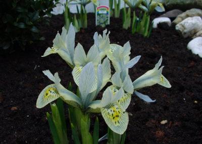 de-vries-groenwerk-beplanting-43