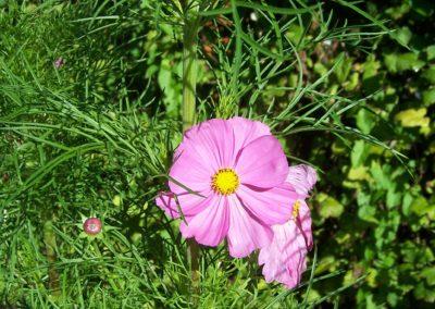 wilde bloemen tuin 006