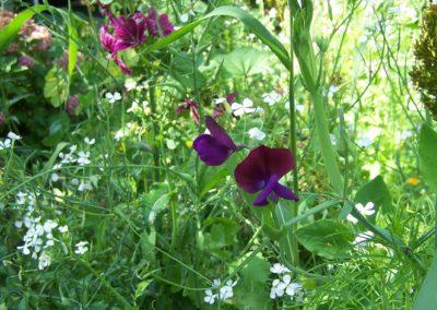 wilde bloemen tuin 011